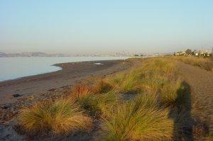 Alameda Beach
