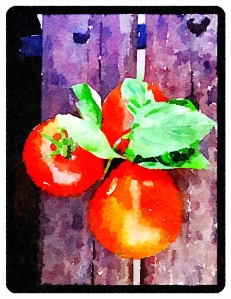 Fresh Basil and Tomatoes